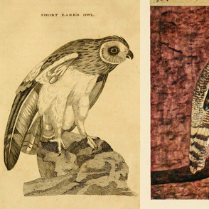 Owl Montage
