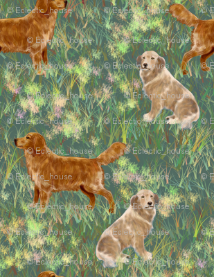 Two Golden Retrievers in a field
