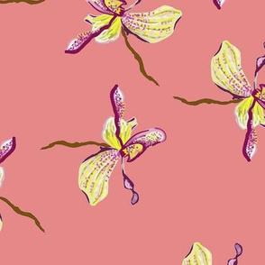 peach_orchids