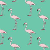 Flamingos - Turquoise