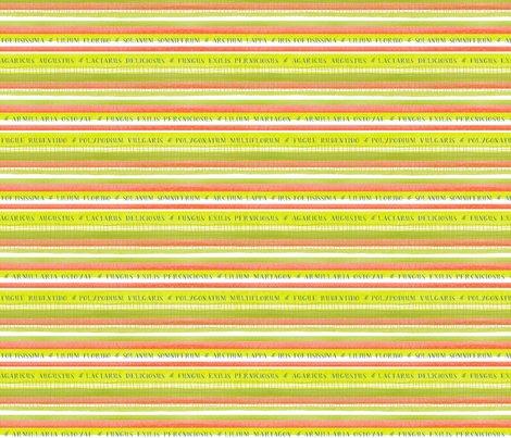 Multiflorum-stripegreen-01_shop_preview