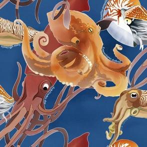 Cephalopoda Scramble