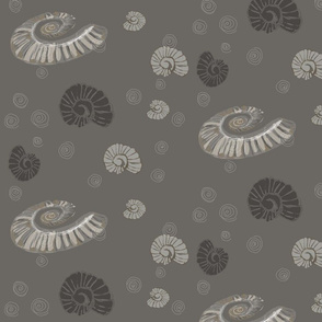 Ammonites Fossils Cephalopods