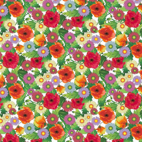Poppies and Daisies on White