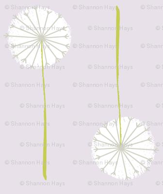 lavender dandelion