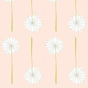 blush dandelion