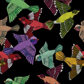 Colorful Birds on Black