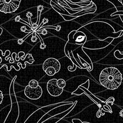 2_cephalopods_black___white_shop_thumb