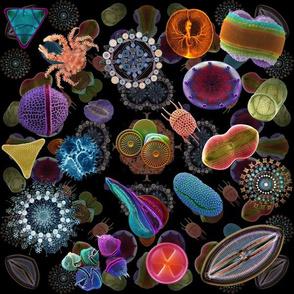 Diatom_collage