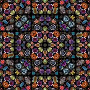 Diatom_Collage_Kaleidoscoped