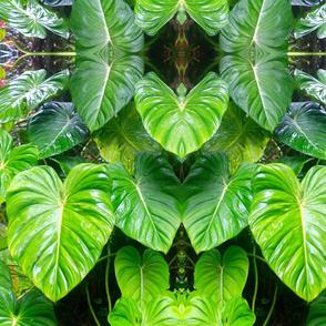 Hawaiian Foliage