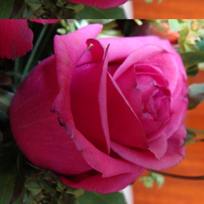 funeral_flowers_008