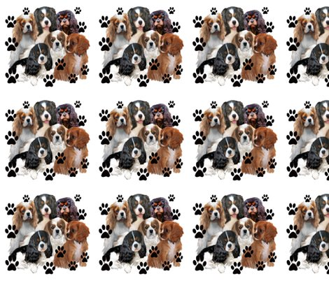 4679235_r4679235_rrcavalier_king_charles_spanielas_all_colors2_f_shop_preview