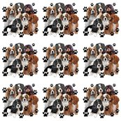 R4679235_rrcavalier_king_charles_spanielas_all_colors2__shop_thumb