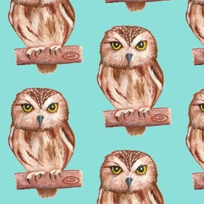 Owls Teal Blue