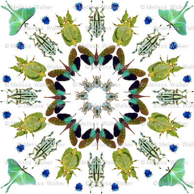 Rrbeetle_mandala_02_trimmed_preview