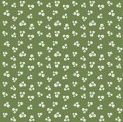 Maidenhair Fern and Ginkgo_Fern Seeds