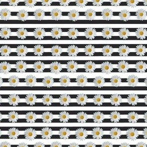 Stripe Daisys