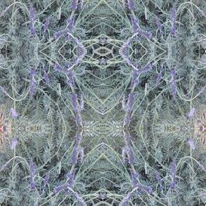 Lavender Lace (Ref. 4746)