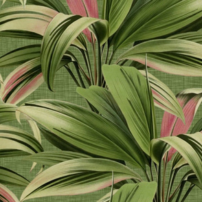 Cordyline Princess Margaret Watercolor Green