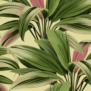 Cordyline Princess Margaret Watercolor Cream