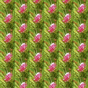 4697850_rrChristmas_Pine_Cones-rs