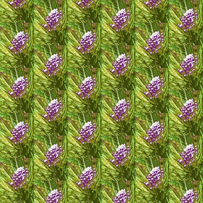 4697852_rrChristmas_Pine_Cones-rs
