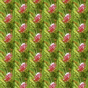 4697858_Christmas_Pine_Cones-rs