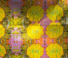 Cactus_2_4500_comment_643281_thumb