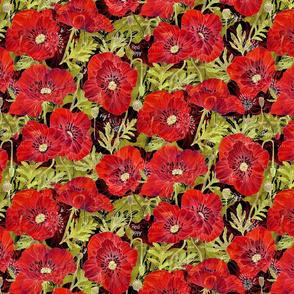 California_Poppies_Botanical_Sketchbook_Dk_Med16in