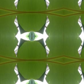 splt_banana_leaf_June_2010_026