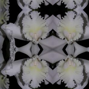 white_cattleya_12-04_125