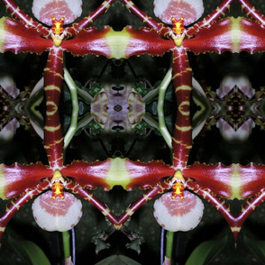 spider_orchid_best_12-04_135