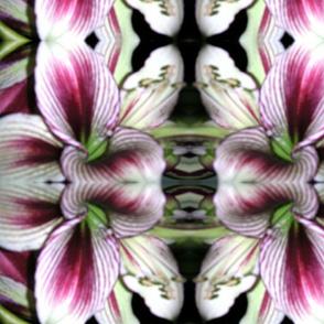 amarylis_closeup__12-04_182