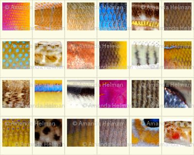 Fish Polaroids