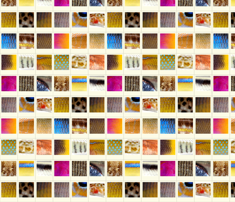 Fish Polaroids fabric by mongiesama on Spoonflower - custom fabric