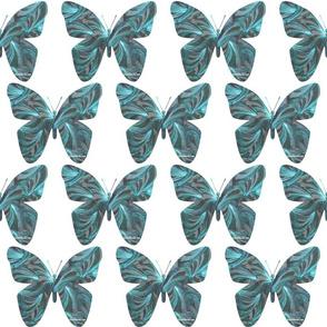 Ocean_Fans_Butterfly