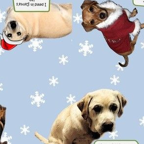 Christmas Dog Shaming 01