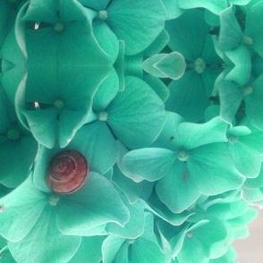 Snail on Hydrangeas - Teal