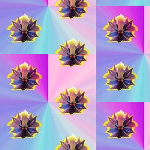 Pastel Gradient Tulip Polka Dot