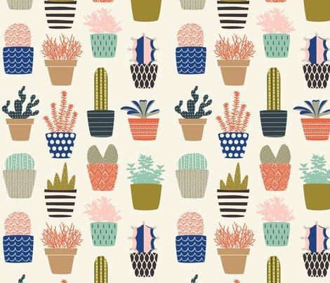 Succulents-01_shop_preview