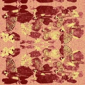 Poppy Red Sparrow Hawks-ch
