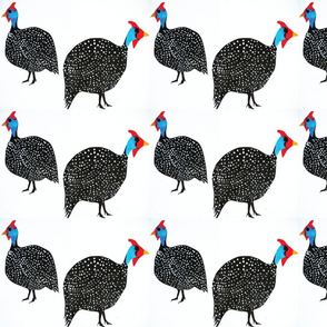 Guinea_Fowl