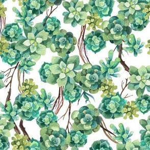 Succulent and vine