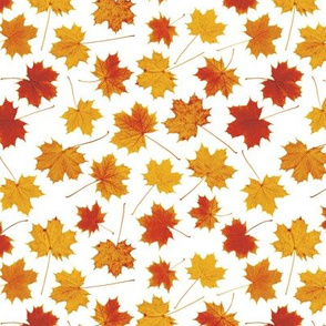 small maple leaves - autumn colors