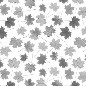 small greyscale maple leaves
