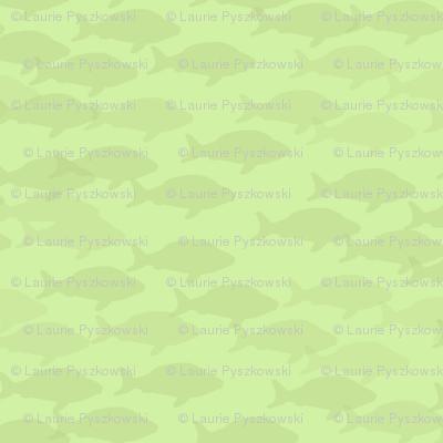 Green Fish School