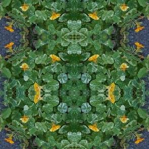The Gnome's Nasturtium Garden (Ref. 4597 )