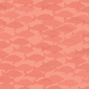 Peachy Orange Fish School