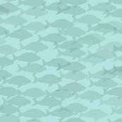 Aqua Fish on Fish
